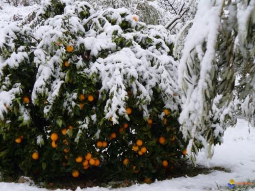 oranger-visoflora-21825.jpg